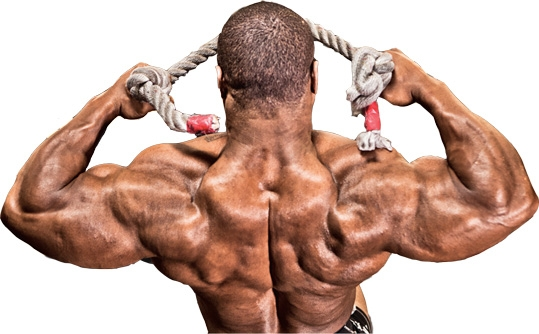übungen im bodybuilding