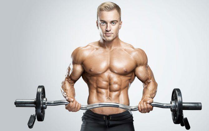 rekrutierung von muskelmasse